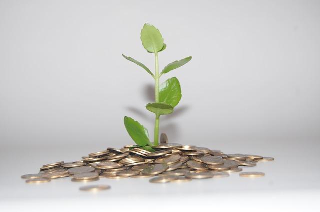 mince kolem rostlinky